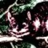 CheshireNoir's picture